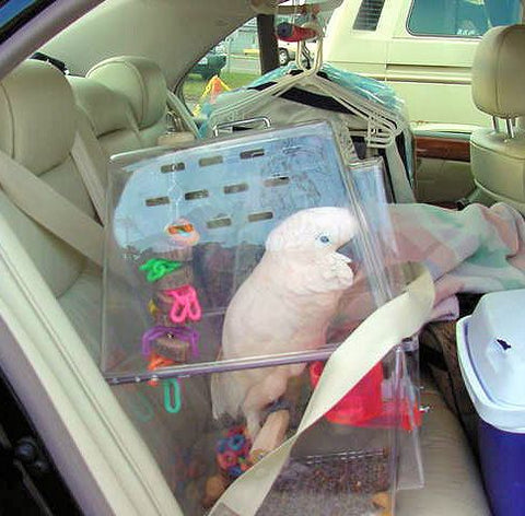 car travel with parrots