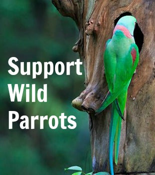 Wild Parrot Conservation