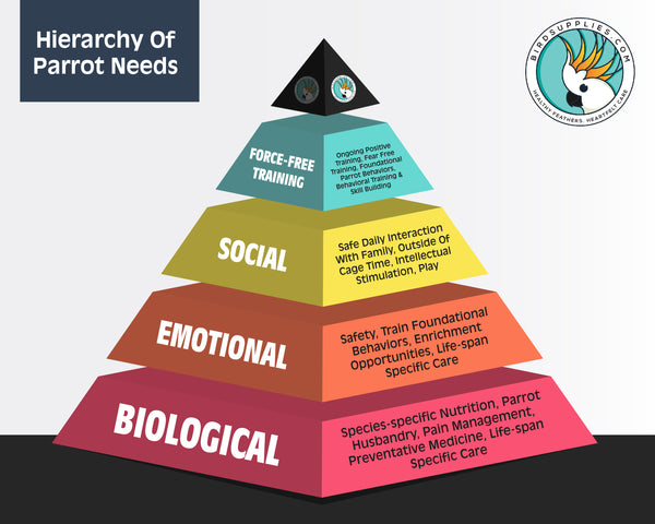 Hierarchy of Parrot Needs