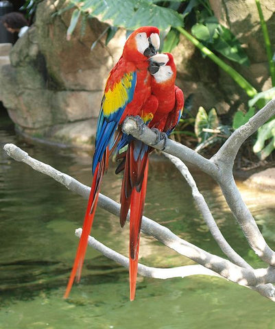 The Macaw Bond
