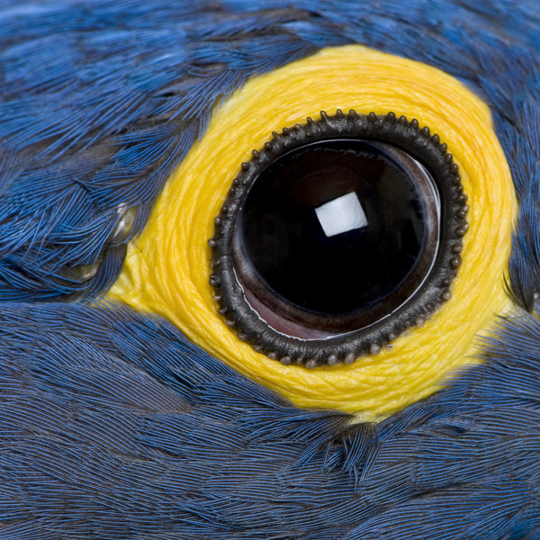 Parrot Eye Problems: Eye Problems And Your Bird