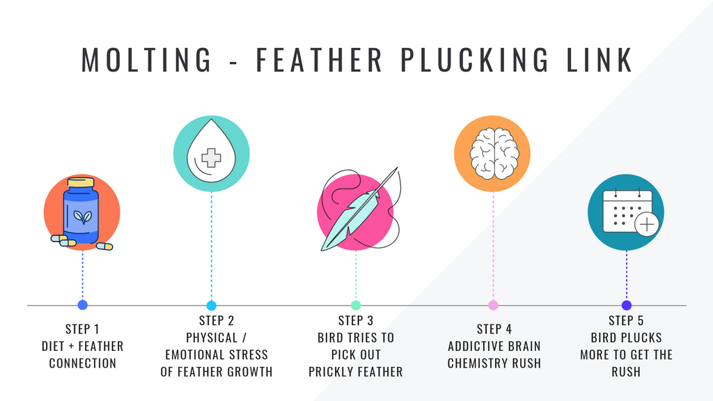 The Molting Plucking Connection