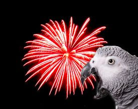 Parrots and Fireworks