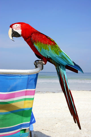 Macaw at Beach