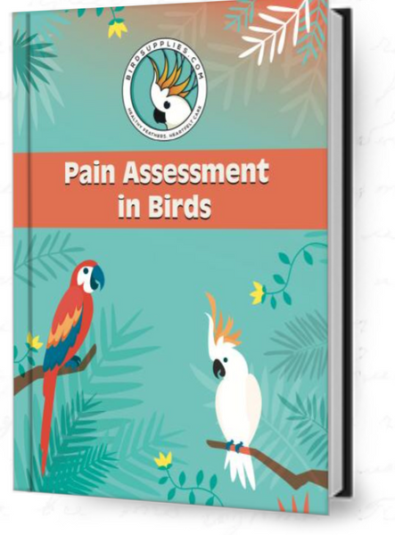 Pain Assessment for Birds Questionnare