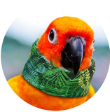 Shop soft neck collars for feather plucking birds