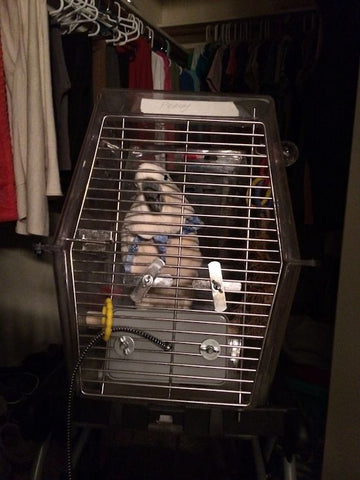 Peachy in his Sleep Cage
