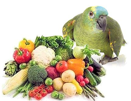 Feed your bird calcium rich vegetables