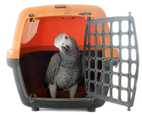 Airline Approved Bird Carrier