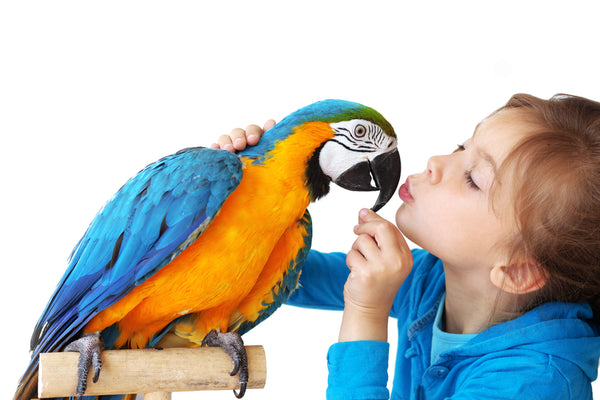 Parrots and  children
