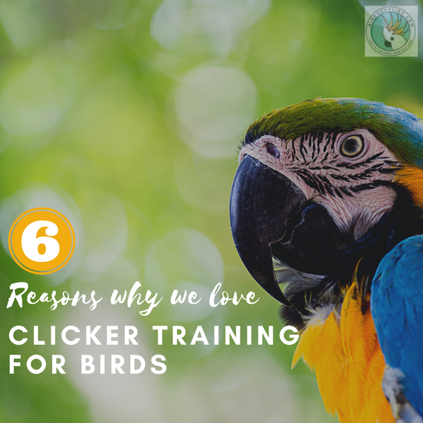 Why I Love Clicker Training for Birds
