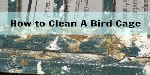 How to Clean a Bird Cate