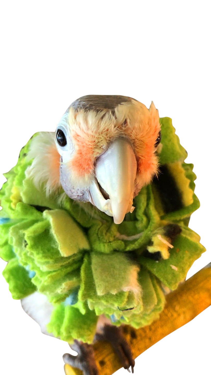 Fringy Soft Neck Collar for Parrot Feather Pickers