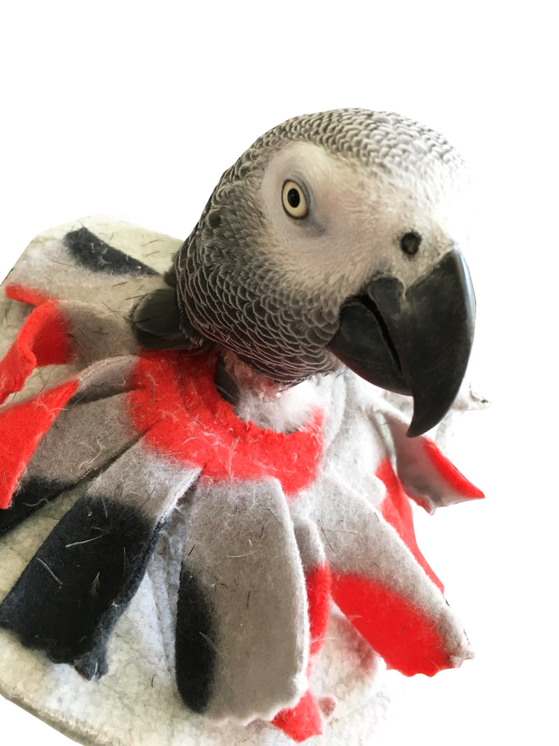 UnRuffledRx Bird Collar, for mild feather picking