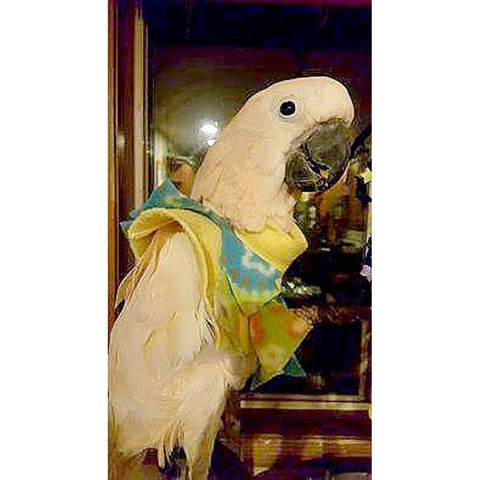 Parrot Poncho with Neck Protection | Bird Collar Plucking Poncho