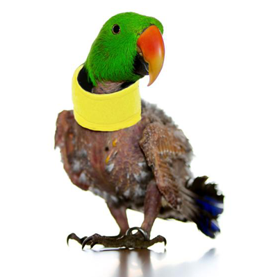 Tube Collar for Parrots