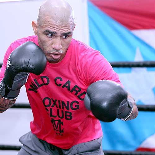 Discontinued miguel cotto wild card tee pink wild for Cotto new tattoo