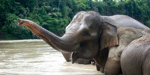 Top Five Wildlife Encounters for Travelers