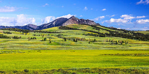 Yellowstone National Park: Where the Bison and Grizzly Bear Play
