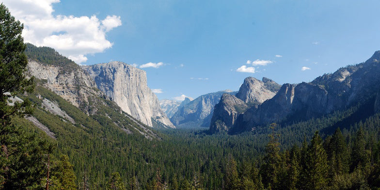 Pinning the Parks: Yosemite National Park