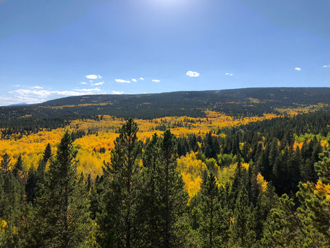 Leaf Peeping Colorado