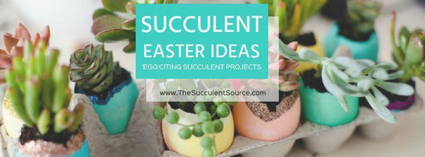 Succulent Easter Egg Ideas
