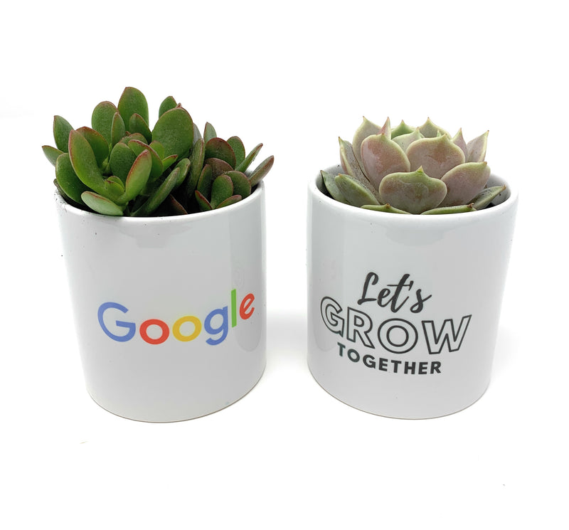 5 Reasons Why Custom Branded Succulents are the Perfect Corporate Succulent Gift to Send