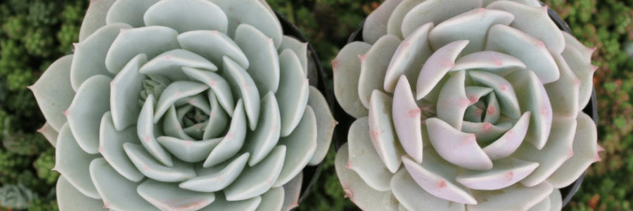 How To Care For Succulents The Ultimate Guide