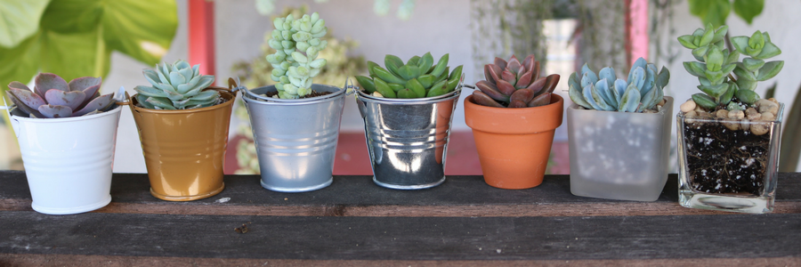 Which Succulent Matches Your Personality? [Quiz]