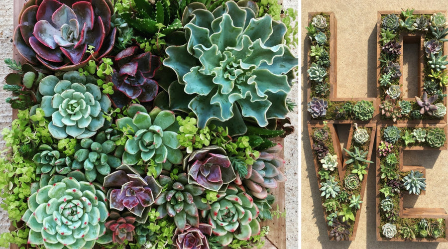 10 Creative Succulent Garden Ideas The Succulent Source