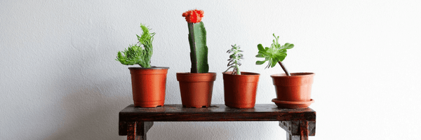 Which Creative Way Should You Display Your Succulents? [Quiz]