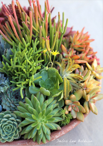 succulent color wheel