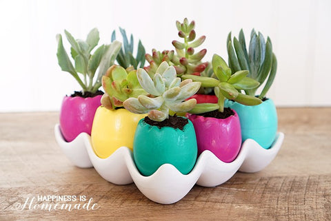 Succulent easter egg ideas these bright and cheery egg shell succulent planters are super quick and easy to make and they make a great easter decoration or hostess gift negle