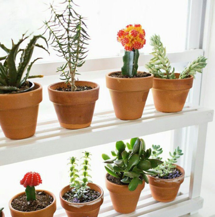 how to care for succulents the ultimate guide. Black Bedroom Furniture Sets. Home Design Ideas