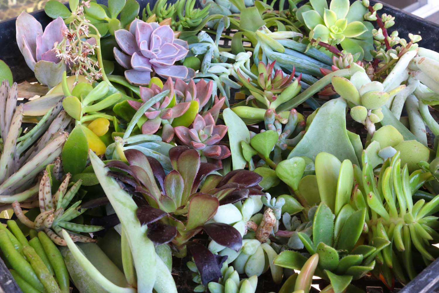 succulent cuttings for wedding wreath diy garden