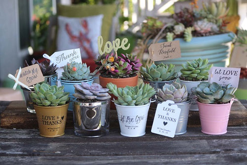 succulent for bridal showers and favors
