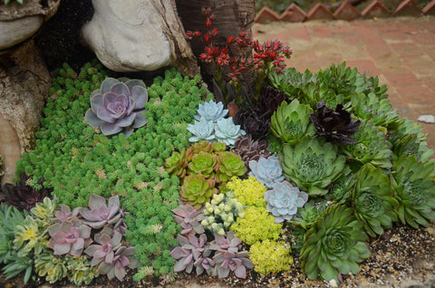 A Guide On How To Plant Succulents