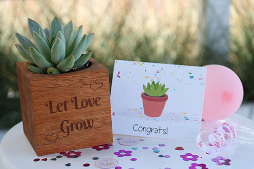 send succulent gift plants - say it with succulents