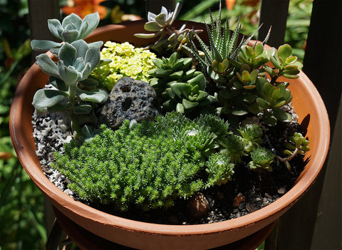 Genial Before You Begin Planting Your Succulents, You Should Consider Where You  Want Them To Grow. If You Live In A Hot Climate, You Should Look For An  Area That ...