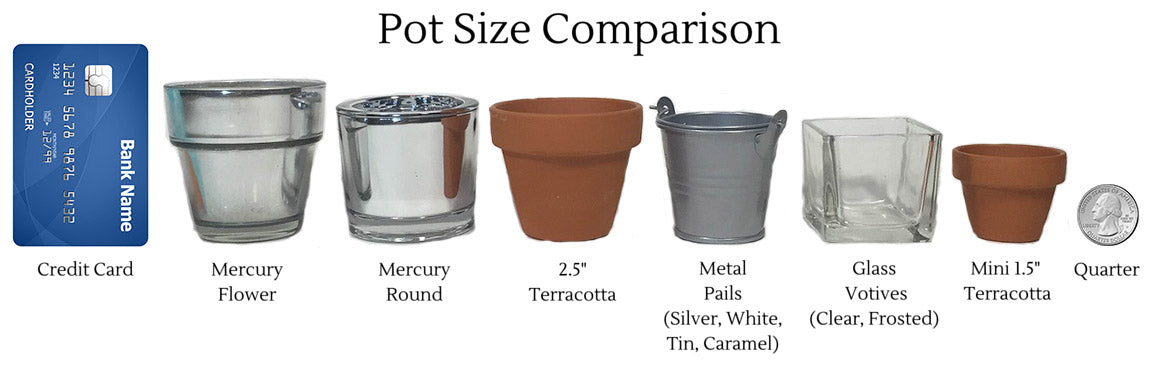 Succulent Pot Size Comparison
