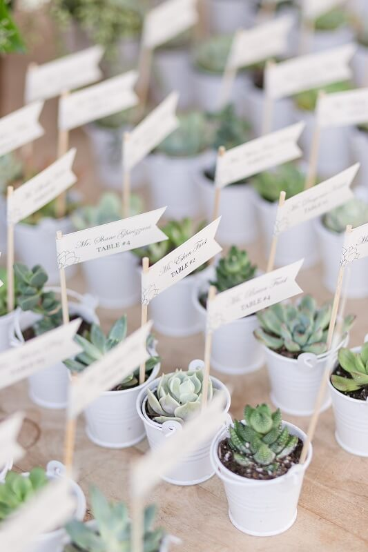 Succulent Wedding Favors Succulents For Sale Succulent Favors