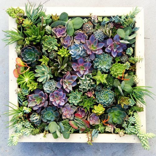 succulent living walls