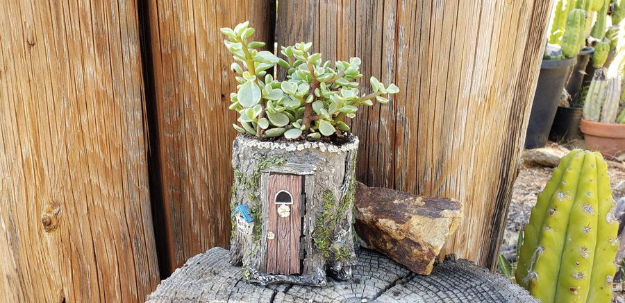 Tree House - Say It with Succulents-SayIt-The Succulent Source
