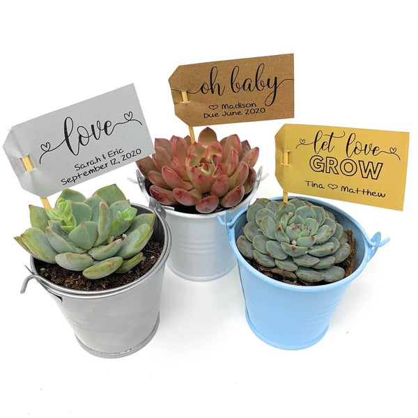 Succulent Of The Month Club (the Succulent Source)