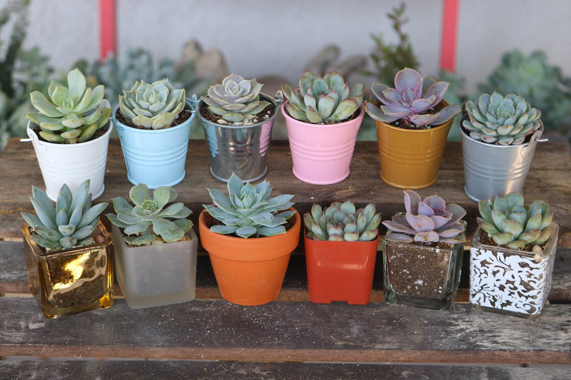 pastel succulent favors wedding fundraiser