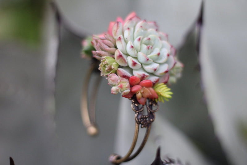 Succulent Cuff Corsage Bracelet - Live bulk wholesale succulent prices at the succulent source - 1
