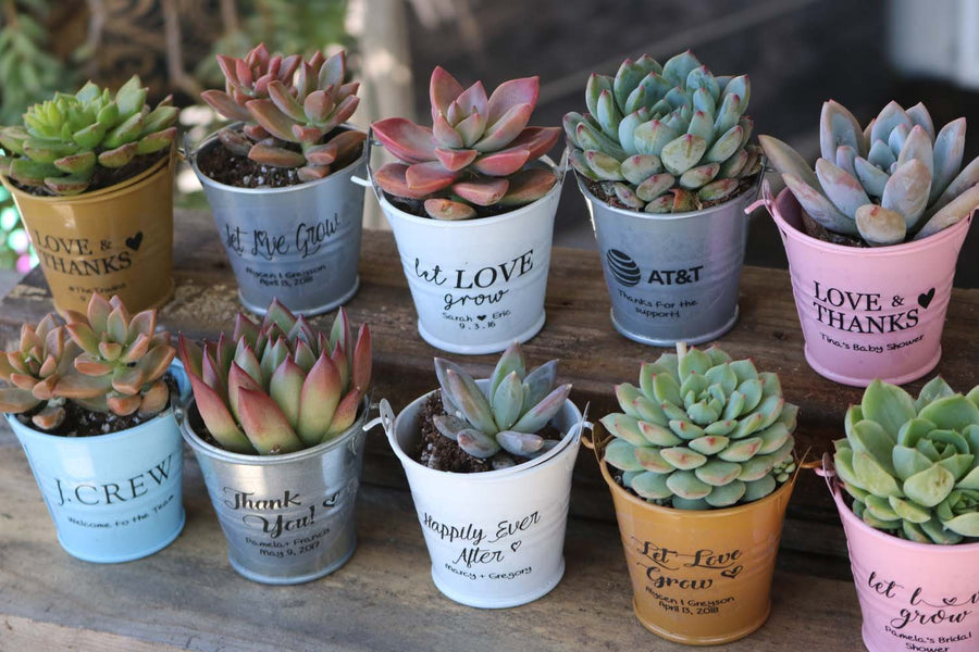 Wedding Succulents - Succulent Wedding Favors Succulents for Sale ...