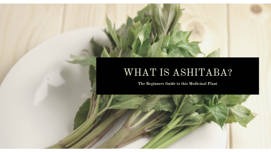 What is Ashitaba? The Beginners Guide to this Edible Plant