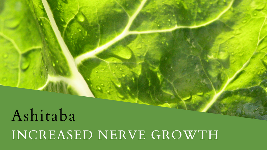 The Ashitaba Plant Benefits for Increased Nerve Growth