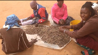 Here's A Peek At The Botswana Women Who Harvest Marula That Goes Into Our Body Oils